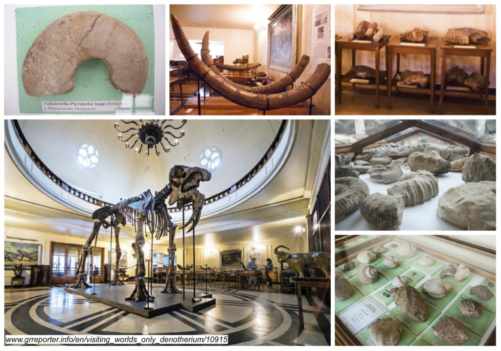 Gallery: Museum of Paleontology and Historical Geology