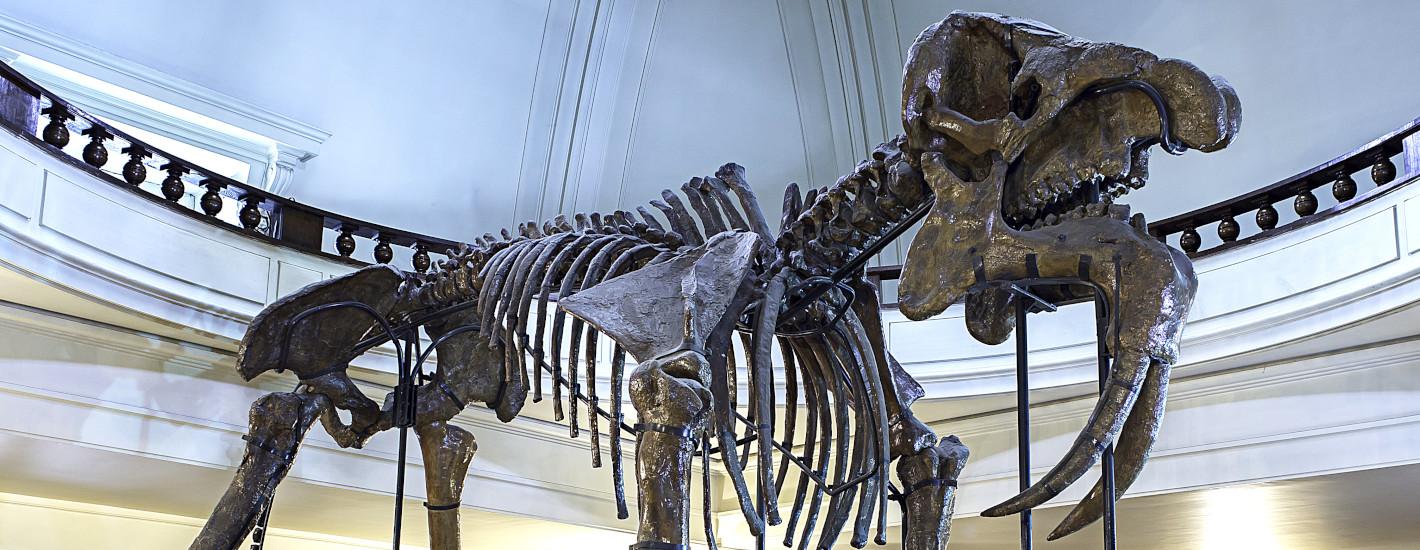 Музей по Палеонтология и Исторична геология