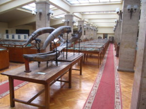 Museum of Paleontology and Historical Geology-3166