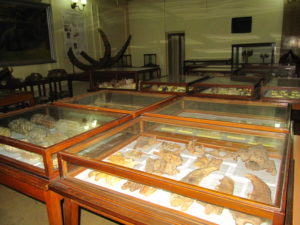 Museum of Paleontology and Historical Geology-3171