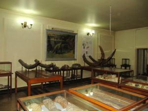 Museum of Paleontology and Historical Geology-3172