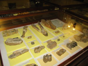 Museum of Paleontology and Historical Geology-3176