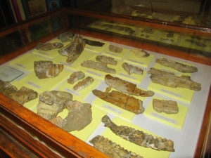 Museum of Paleontology and Historical Geology-3177